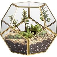 NCYP Brass Glass Pentagon Regular Dodecahedron Geometric Terrarium Container Desktop Planter for Succulent Fern Moss Air…