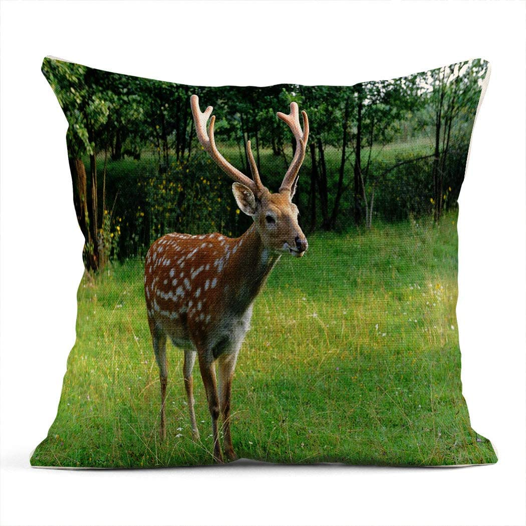 Axis Deer Pillow Size: 12 X 20 Axis