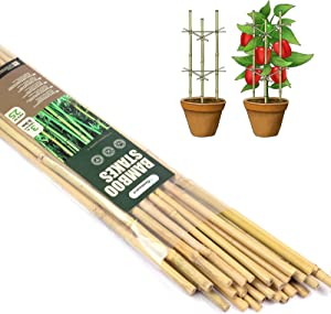 Cambaverd Natural Bamboo Stakes 3 Feet (90cm), Eco-Friendly Bamboo Plant Stakes, for Roma Tomatoes Sunflowers Bamboo Pole Beans Trees Potted and Climbing Plants - Pack of 25 Bamboo Stick