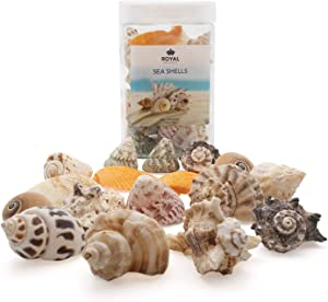 Royal Imports Sea Shells Beach Assorted, Colorful Ocean Seashell Accent Mix, Aquarium Decoration, Party Crafts Collection, Large, 1 LB