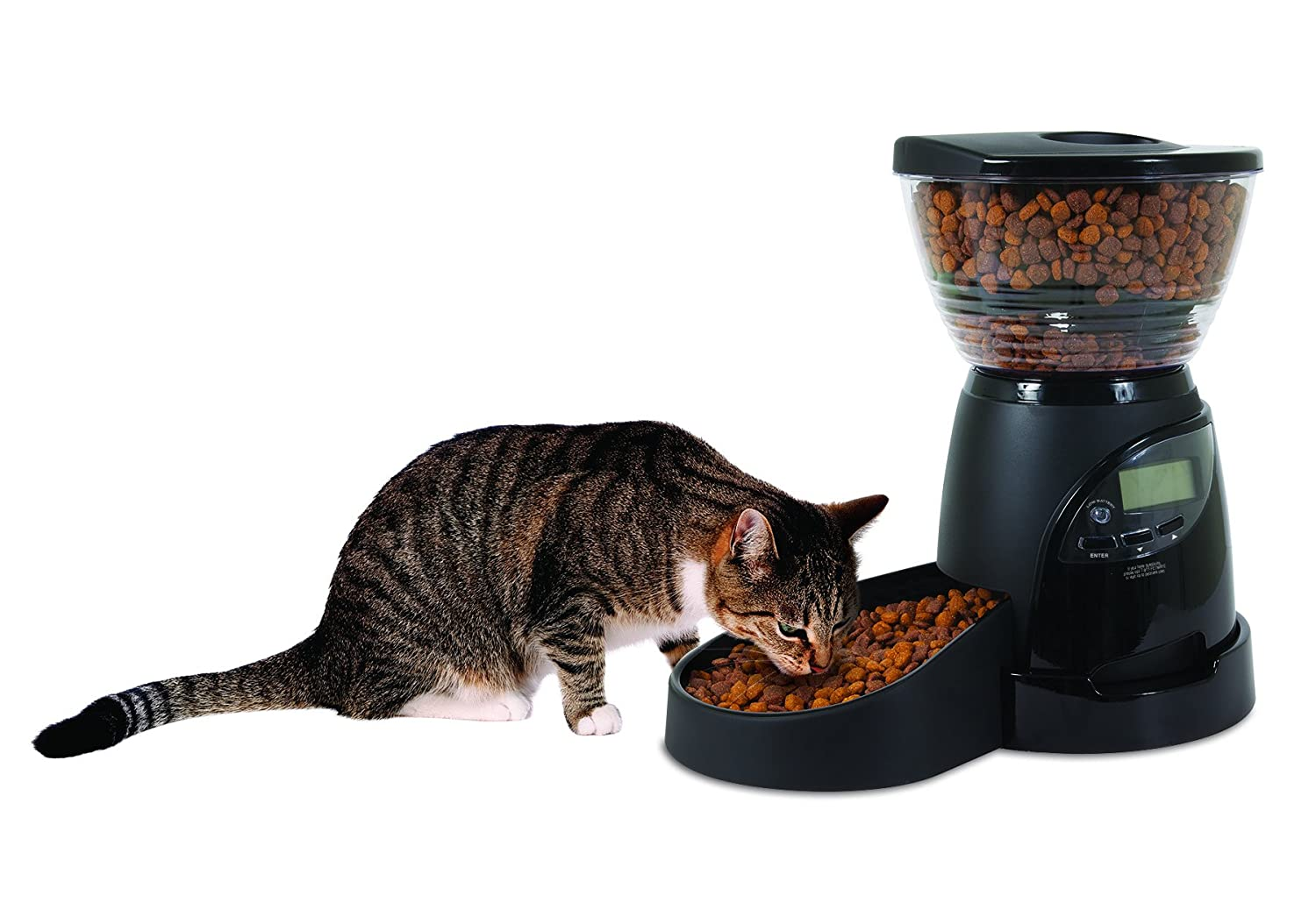 cat guide s reviews automatic feeder buyer best