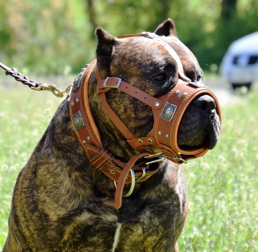 Bestia ''EROS Genuine Leather Dog Muzzle, Large Breeds, Cane Corso, Rottweiler, Boxer, Presa, Bullmastiff, Dogo, 100% Leather, Studded, L- XXL Size, Soft Padded. Made in Europe!