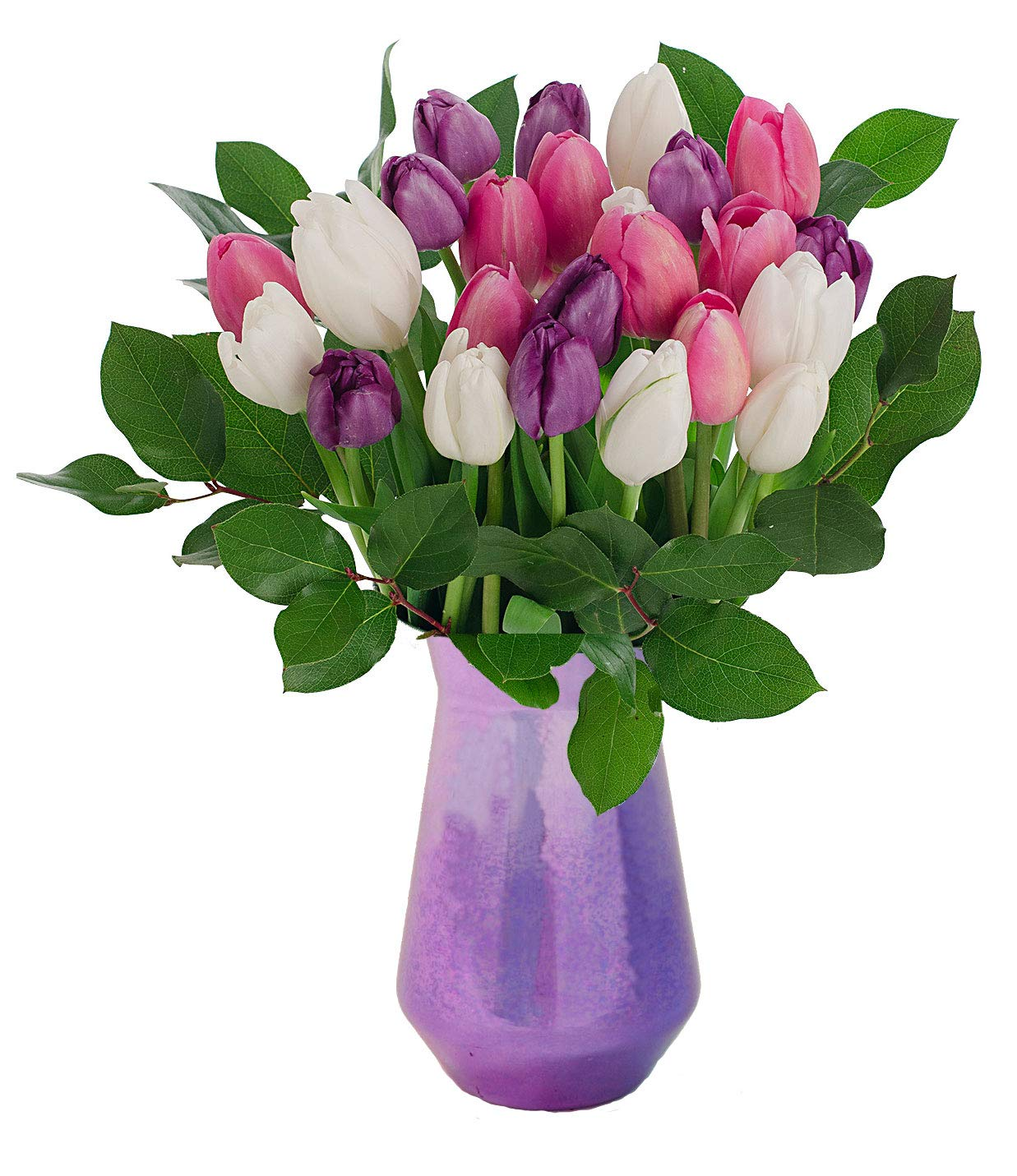 Stargazer Barn - The Duchess Bouquet - 2 Dozen Assorted Tulips With Vase - Farm Fresh by Stargazer Barn