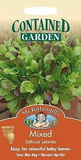Portal Cool Sr. Fothergills - Vegetales - Lechuga - hojas mezcladas 1200 Semillas