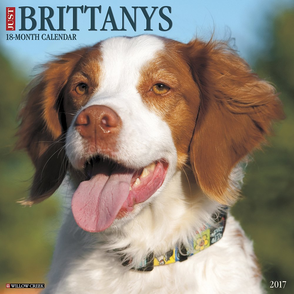 Just Brittanys 2017 Wall Calendar (Dog Breed Calendars)