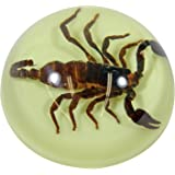 """REALBUG 3.5"""" Black Scorpion Dome Paperweight Glow in The Dark"""