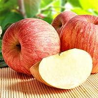 马达果园 大连酸甜脆红富士苹果2.5Kg