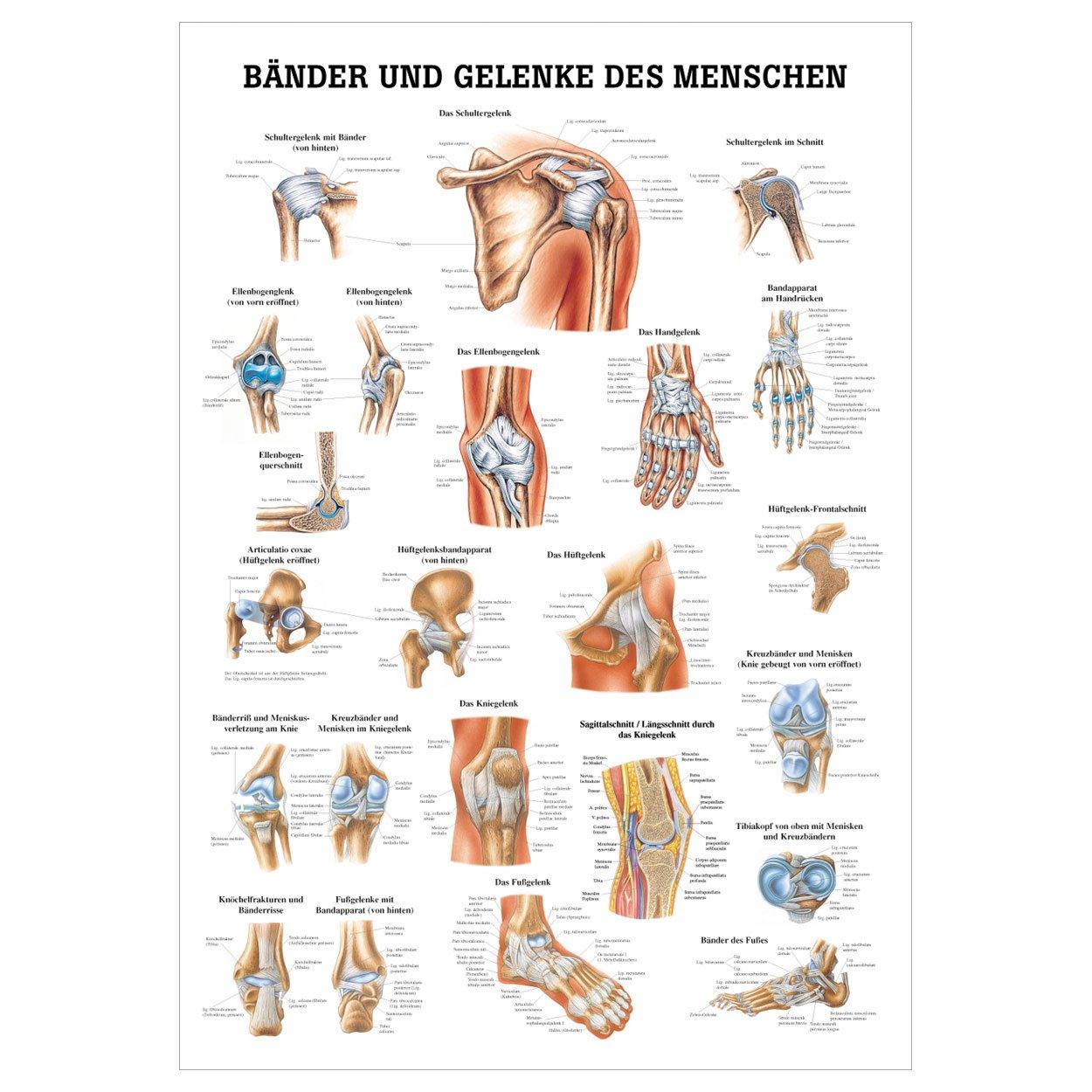 Schön Menschlicher Körper Gelenke Zeitgenössisch - Physiologie Von ...