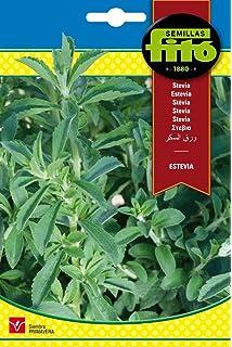 Huerto Urbano - Kit Stevia - Batlle: Amazon.es: Jardín