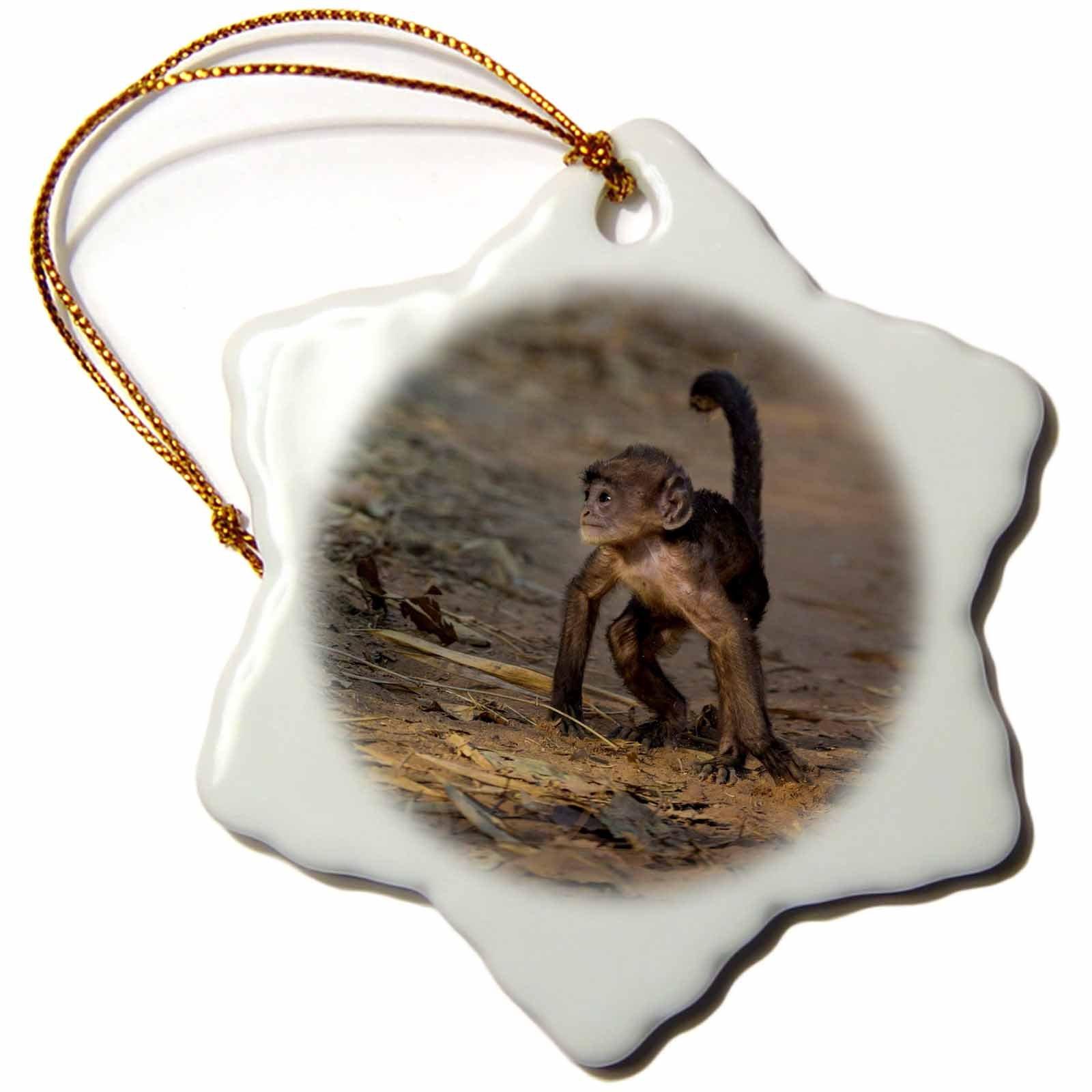 3dRose Danita Delimont - Baby animals - India. Hanuman langur at Bandhavgarh Tiger Reserve - 3 inch Snowflake Porcelain Ornament (orn_276803_1)