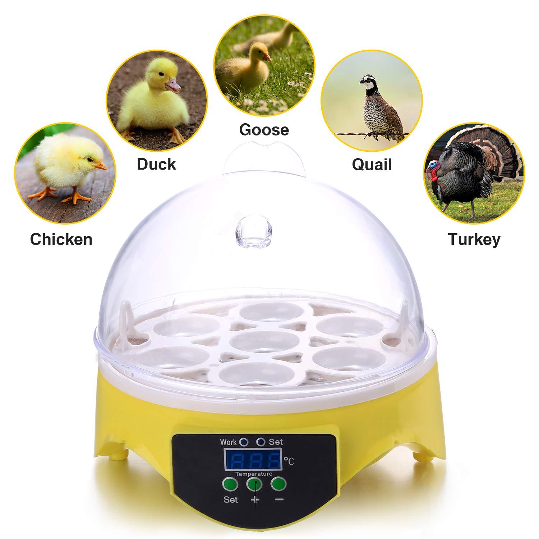 Currens Mini Egg Incubator,Digital Incubators for Hatching Chicken Turkey Quail Fertilized Eggs 71HCumDGhyL