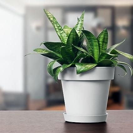 Pot De Fleur Avec Soucoupe En Plastique Lofly Classique 25 Cm Diam