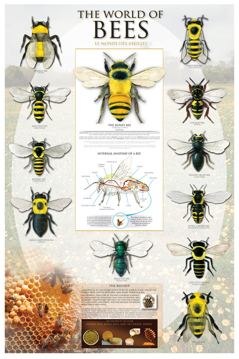Amazon The World Of Bees Poster Print 24x36 Posters Prints
