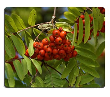 Jun Xt Tapis De Souris Rose Musquee Plante Rouge Fruits En