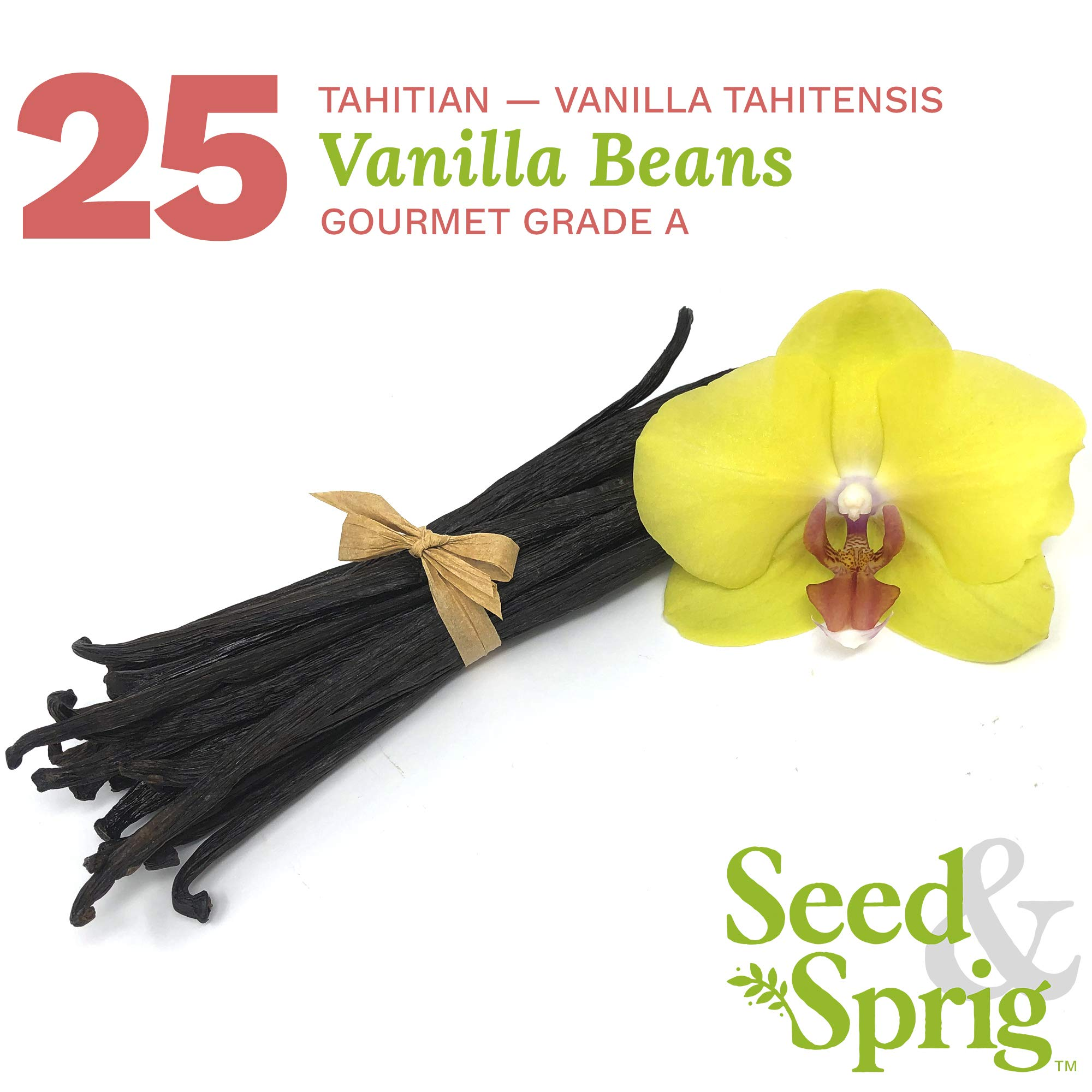 Seed & Sprig Tahitian Vanilla Beans | 25 Pack | Bulk Whole Vanilla Pods & Seeds for Baking, Coffee, Brewing, Cooking | Gourmet Grade A | 5.5+ inches Non-GMO Long, Plump, Moist by Seed & Sprig