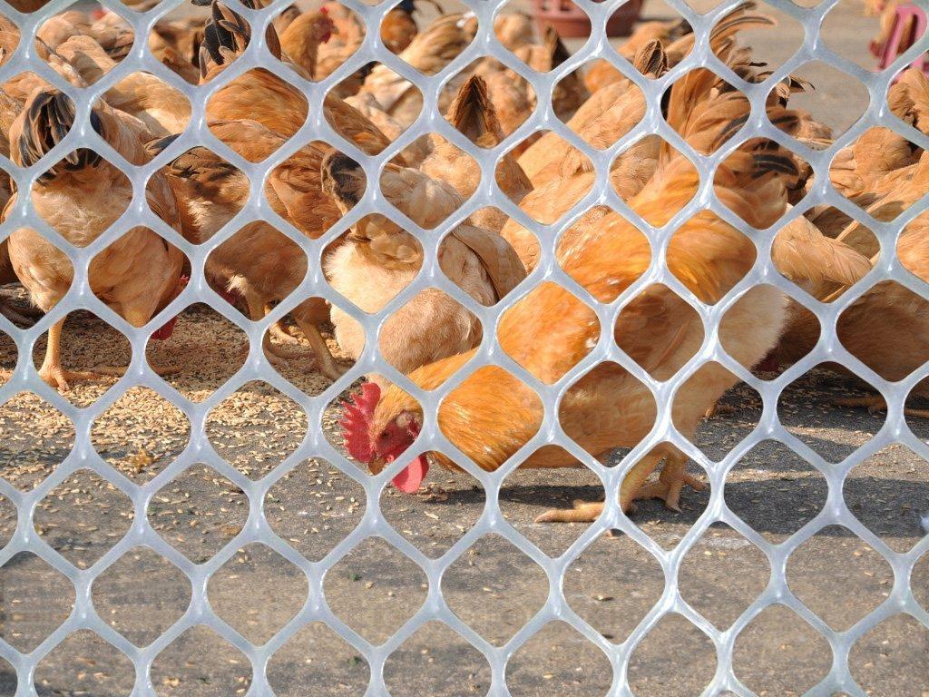 V Protek 5x30ft Poultry Netting Plastic Poultry Fence, Chicken Net Fence For Flower Plants Support,White