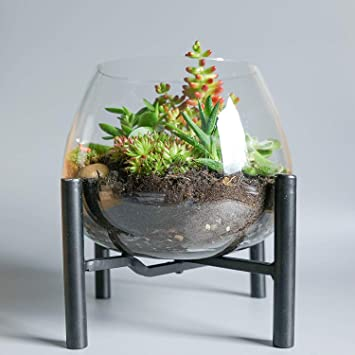 1960 S Style Terrarium Kit With Wooden Stand Diy Succulent Cacti