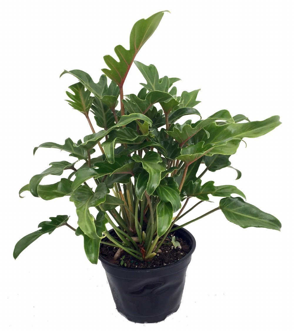 8 Low-Maintenance Houseplants 1