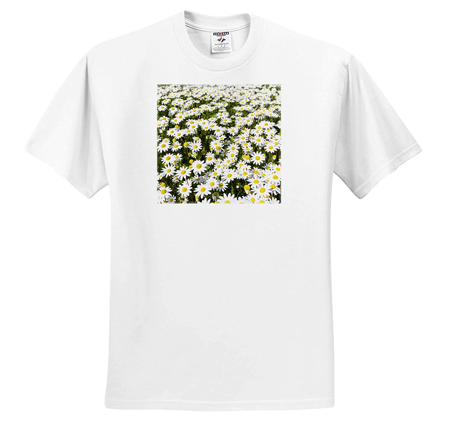 ts/_313830 Portugal Adult T-Shirt XL 3dRose Danita Delimont Flowers Meadow Near Marvao Scentless False Mayweed