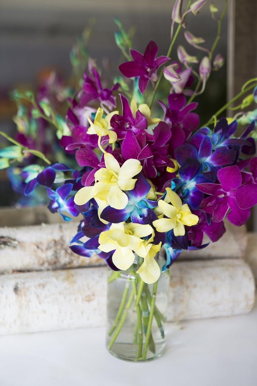 Amazon mothers day special kabloom exotic rainbow orchid amazon mothers day special kabloom exotic rainbow orchid bouquet of 5 blue dendrobium orchids 3 purple dendrobium orchids and 2 yellow dendrobium izmirmasajfo