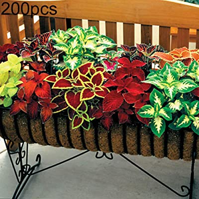 WskLinft 200Pcs Mixed Coleus Begonia Multicolor Flower Plant Seeds Garden Bonsai Decor for Planting for Indoor and Outdoor All Seeds are Heirloom, 100% Non-GMO! Coleus Seeds 200pcs : Garden & Outdoor