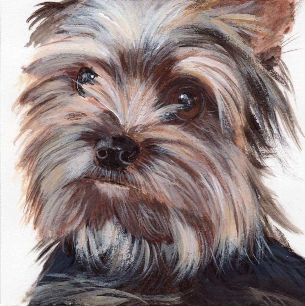 Yorkshire Terrier Paint By Numbers DIY Kit Dog Painting By Number Art Animal Paint By Numbers Canvas Pet Painting By Numbers Painting Kit Hobby Art