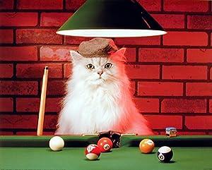 Cute Cat Persian Playing Pool Kids Room Wall Decor Art Print Poster (16x20)