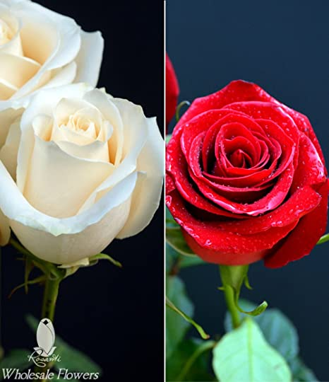 Amazon Com Rosanti Fresh Roses 50 White And 50 Red Roses
