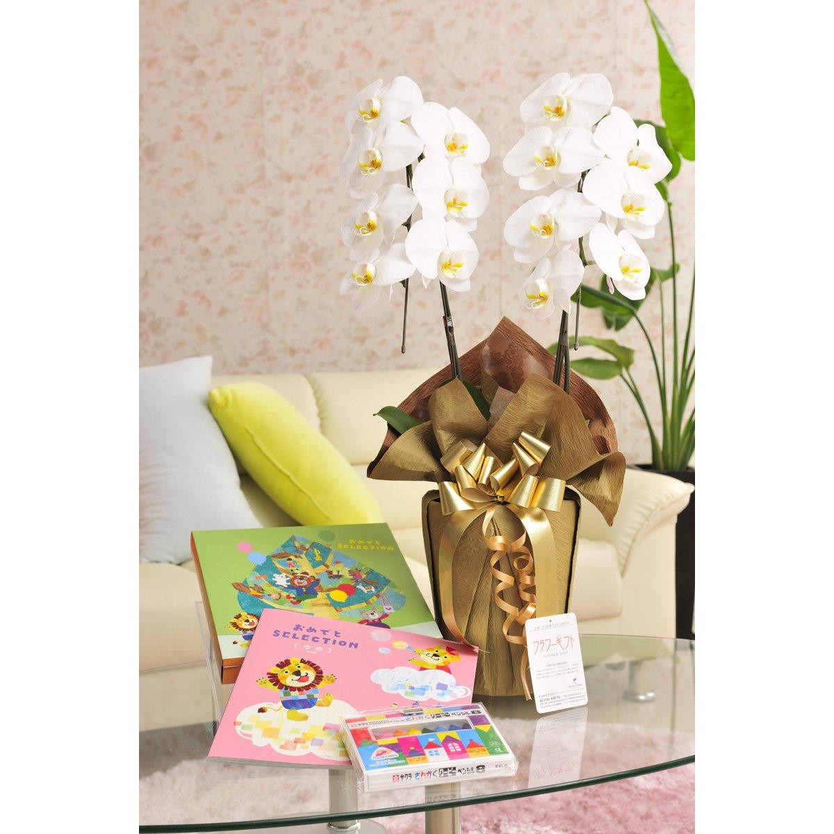 花とギフトのセット 胡蝶蘭 大輪2本立とぬり絵&クーピー付きベビー幼児用カタログギフト(おめでとうセレクション/ゆめ) B07DTHMGKN