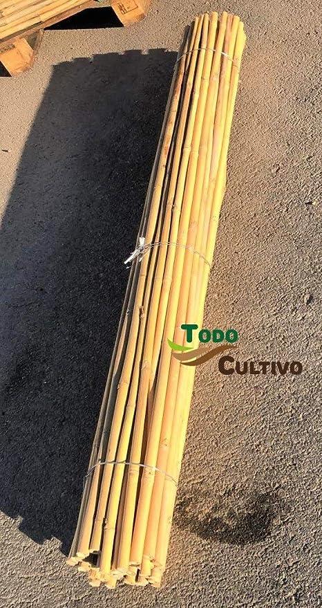 Tutor de bambú tailandés de 1, 5 m. de Altura, diametro 20/22 ...