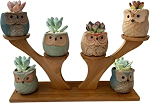 Succulent Pots, Brajttt White Ceramic Planters Modern Decorative Flower with Bamboo Saucers Stand Holder &Drainage, Home Office Desk Garden Mini Cactus & Flower Pots(6 Pack)…