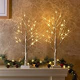PEIDUO Set of 2 2FT 24LT Birch Tree Battery Powered Warm White LED for Home Decoration, Wedding
