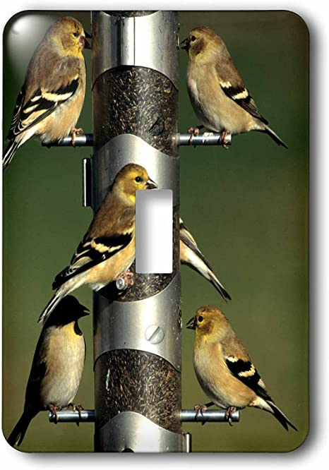 3drose Lsp 250914 1 American Goldfinches At Thistle Tube Feeder Marion County Illinois Single Toggle Switch Silver Amazon Com