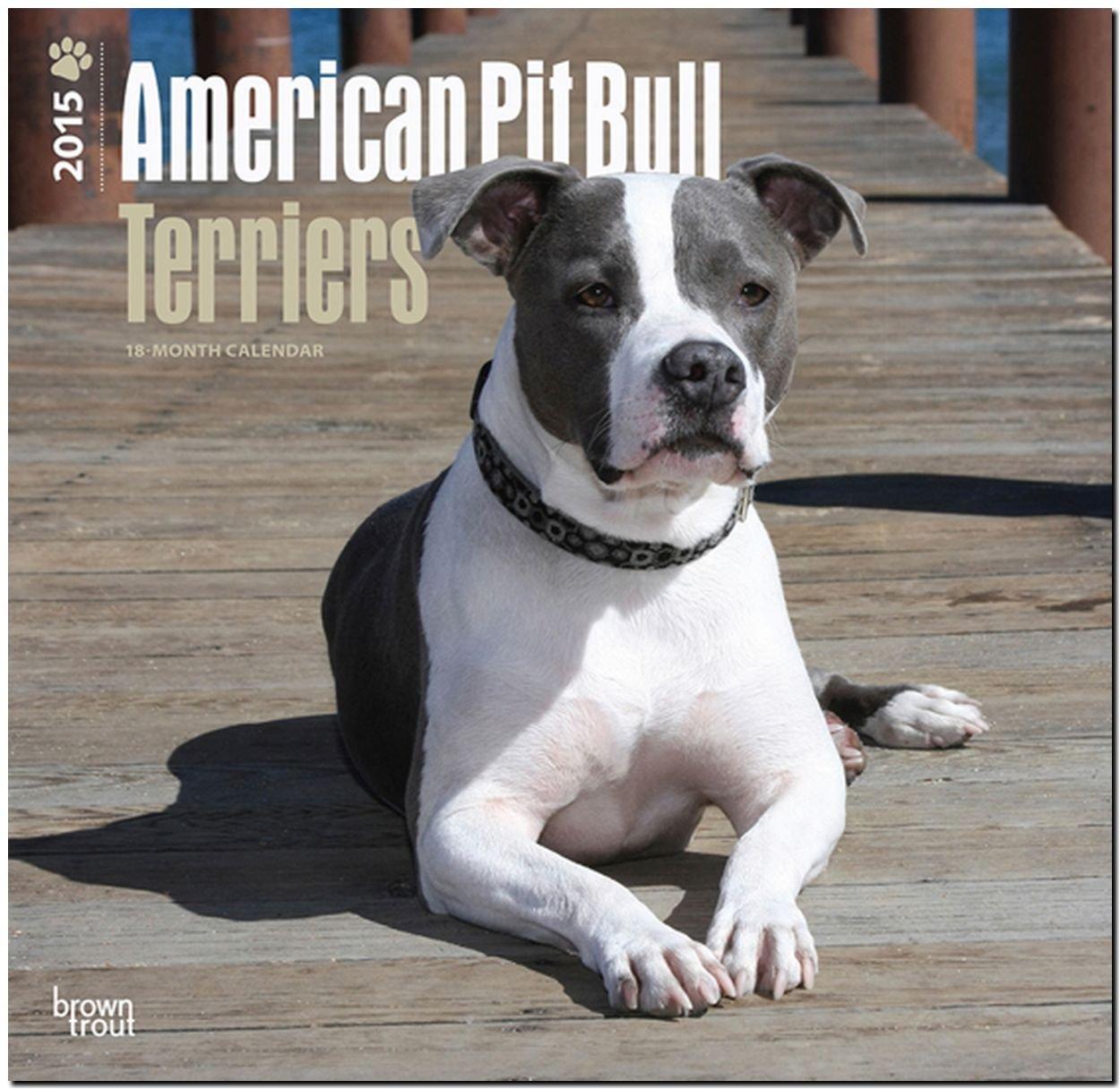 American Pit Bull Terrier Puppies 2015 - Pit Bull Welpen: Original BrownTrout-Kalender [Mehrsprachig] [Kalender]