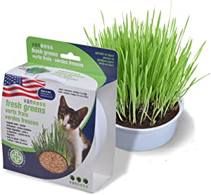 Van Ness Cat Oat Garden Kit