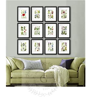 English Wild Flowers Art Prints Set Of 12 Unframed Botanical Illustrations Home Decor