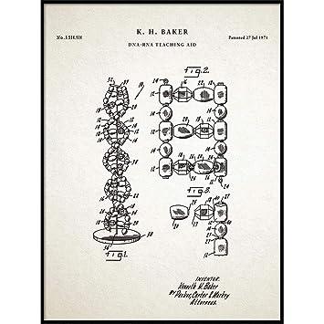 Amazon com: Vintago DNA Print, Genetics Art, Science Poster
