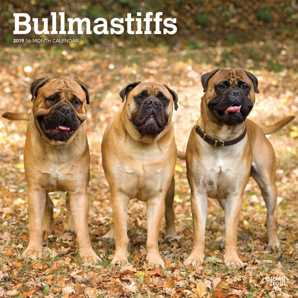 Bullmastiffs 2019 12 x 12 Inch Monthly Square Wall Calendar, Animals Dog Breeds (Multilingual Edition) pdf