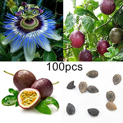WskLinft100Pcs Tropical Exotic Vine Passion Purple Passiflora Edulis Fruit Plant Seeds for Indoor and Outdoor All Seeds are Heirloom, 100% Non-GMO! Passiflora Edulis Fruit Seeds : Garden & Outdoor