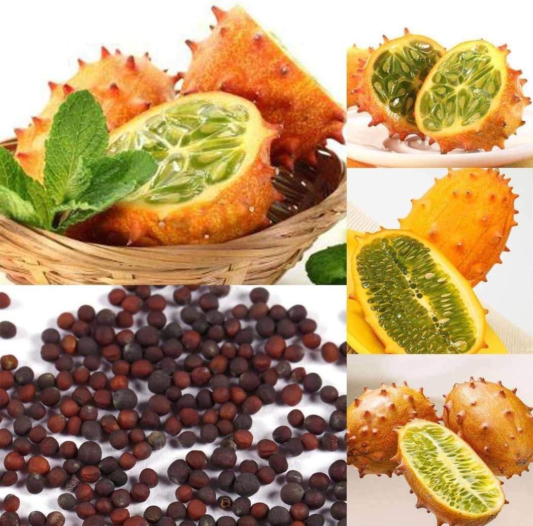 Kisshes Semillas 30 Piezas Cucumis Metuliferus Heirloom Africano Semillas de melón con Cuernos