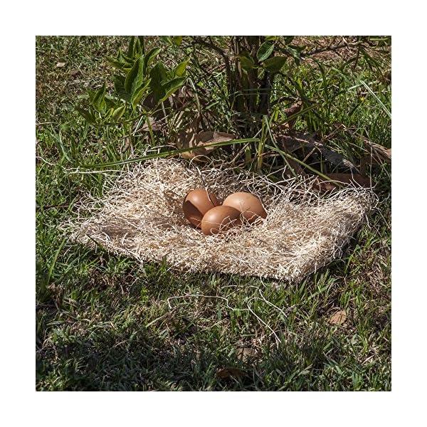 Precision Pet Poultry Pads (10 Pack), 12″ x 9″