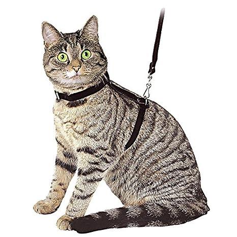 Risultati immagini per pettorina gatto