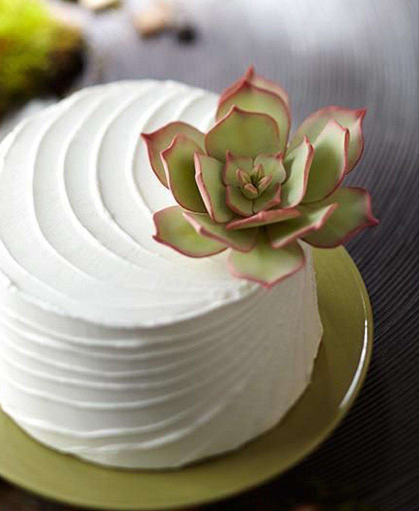 Astra Gourmet 6pcs Plastic Gum Paste Succulents Cut-Outs Set, Cake Decorating Mold Baking Tools(Assorted size)