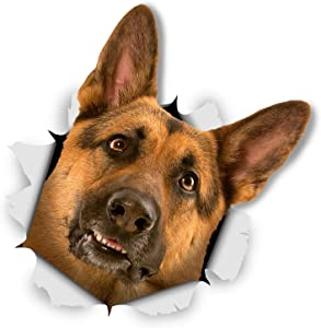 Winston & Bear 3D Dog Stickers - 2 Pack - Curious German Shepherd for Wall, Fridge, Toilet and More - Retail Packaged German Shepherd Dog Stickers
