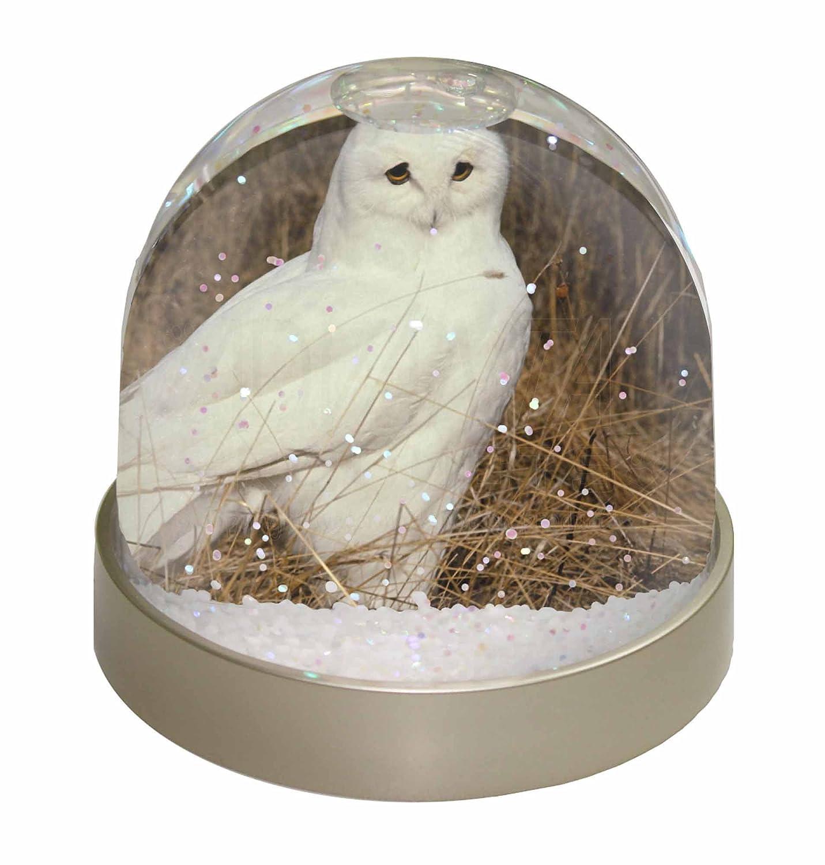 Advanta White Barn Owl Snow Dome Globe Waterball Gift, Multi-Colour, 9.2 x 9.2 x 8 cm Advanta Products AB-O67GL