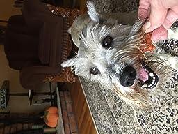 Amazon.com : WHIMZEES Natural Grain Free Dental Dog Treats