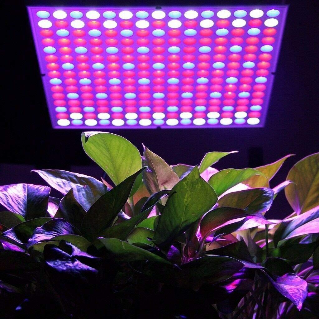 Blau+Rot+UV+IR, Runde FROADP 50W LED Pflanzenlampe Innengarten Pflanze Wachsen Licht Multiple Spektrum 250 LEDs Grow Light Panel f/ür Zimmerpflanzen Gew/ächshaus Pflanzenlabor Gem/üse und Blumen