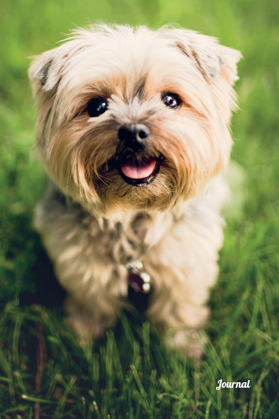 Journal Yorkshire Terrier Dog Journal Notebook Diary 100 Lined Pages Cute Yorkie Puppy Cover Journal To Write In May Emma 9781723572296 Amazon Com Books