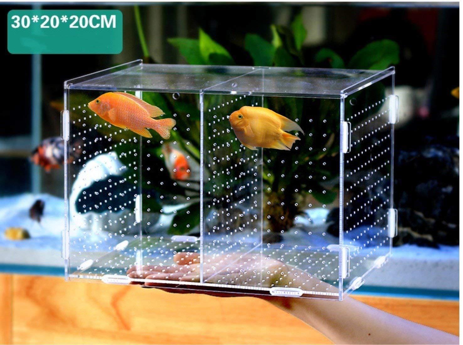 Incubadora de caja de cría colgando aislamiento automático de caja de cría de acuario (Alec transparente 30x20x20 cm L) : Amazon.es: Productos para mascotas