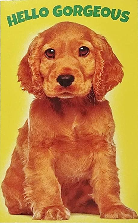COCKER SPANIEL CHARMING DOG GREETINGS NOTE CARD CUTE DOG AND KITTEN